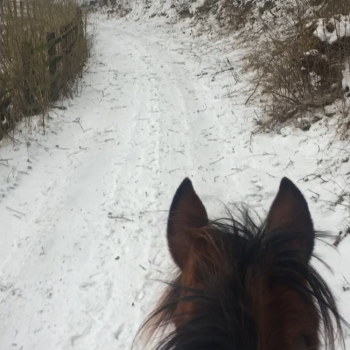 Endurance Blog: Snow, first competitions and a tidy boot!